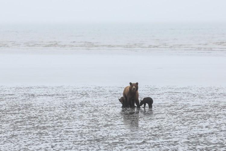 bear_cubs_n_clams