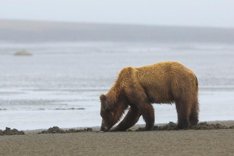 bears_n_clams_1