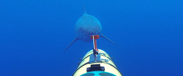 glider_detecting_a_shark_whoi_