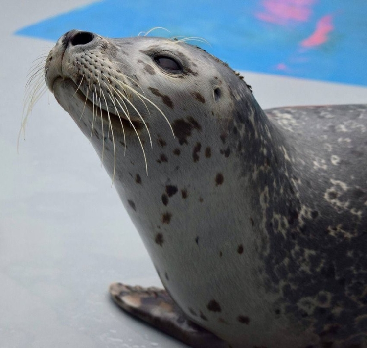 seal_ASLC