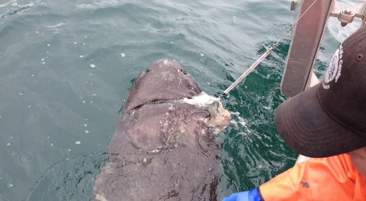 sharkmouth-e1532652905730.jpg