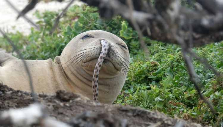 MonkSeal_eel